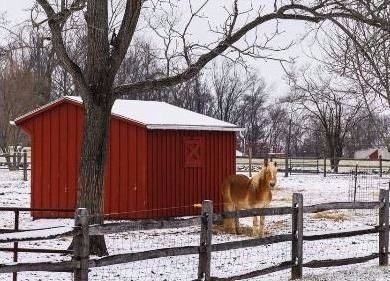 Pony and a red barn in the snow