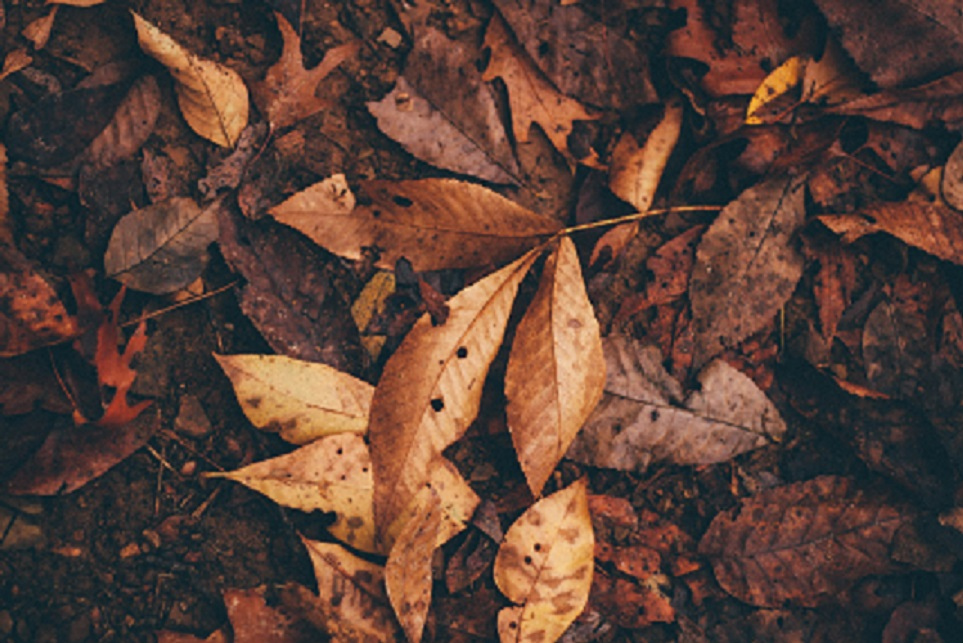 stock image of fallen leaves
