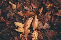 stock image of leaves